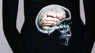 Le ventre, notre deuxième cerveau